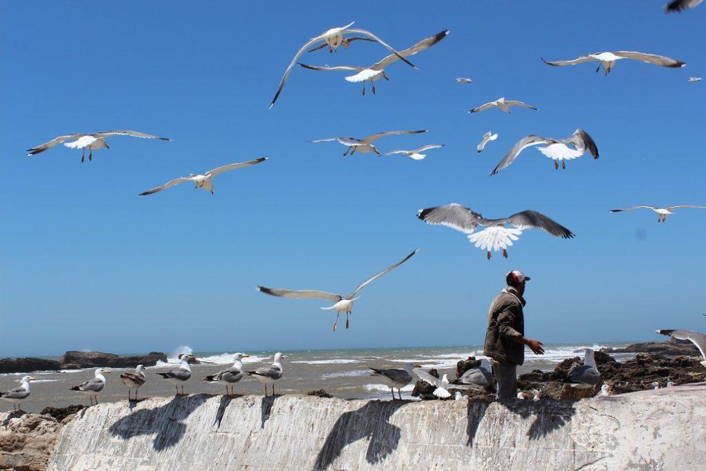 essaouira ville de pêcheur